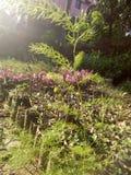 una storia della pianta Fotografie Stock