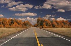 Una strada alla foresta della tremula Fotografia Stock Libera da Diritti