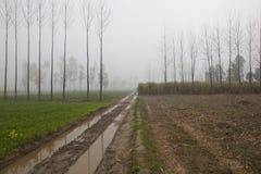 Agricoltura nel Punjab rurale Immagine Stock