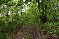 Una strada campestre bagnata nella foresta immagini stock