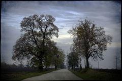 Una strada con un albero e un cielo nuvoloso Immagine Stock