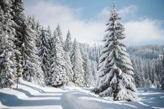 Una strada della montagna ed i pini innevati fotografia stock