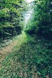 Una strada dimenticata invasa nel legno Fotografia Stock