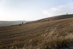 Una strada e un granulo dei campi dentro con la margherita Fotografie Stock