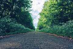 Una strada inutilizzata nel legno in natura immagini stock libere da diritti