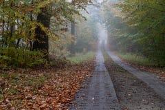 Una strada locale nei rami nebbiosi decidui di una foresta di deciduo immagini stock