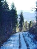Una strada nella foresta Fotografie Stock