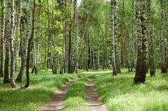 Una strada non asfaltata nella foresta della sorgente Fotografie Stock