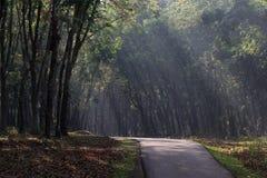 Una strada in piantagione di gomma Fotografie Stock Libere da Diritti
