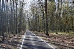 Una strada sola Fotografie Stock Libere da Diritti