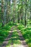 Una strada sola nella foresta Fotografia Stock Libera da Diritti
