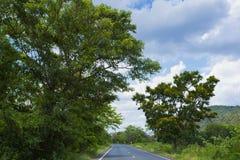 Una strada verde Fotografia Stock