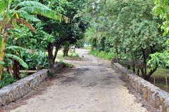 Una strada, via in un parco, Mauritius fotografia stock