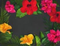 Una struttura dei fiori (ibischi e rose di dof) e delle foglie verdi o Fotografia Stock Libera da Diritti