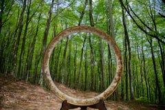 Una struttura della foresta Fotografie Stock Libere da Diritti