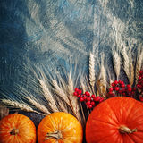 Una tabla adornada con las calabazas, festival de la cosecha, acción de gracias feliz Imagen de archivo libre de regalías