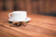 Una tarántula y una taza de café Bebida en una barra del animal doméstico con un arácnido melenudo salvaje en una tabla de madera imágenes de archivo libres de regalías
