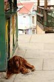 Una tarde perezosa del perro fotografía de archivo libre de regalías