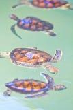 Una tartaruga di mare Immagine Stock