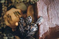 Una tartaruga domestica nella fine dell'acquario su Fotografia Stock Libera da Diritti