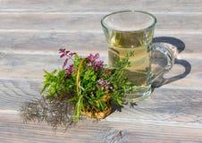 Una taza clara de infusión de hierbas y una cesta con las hierbas frescas Foto de archivo libre de regalías