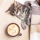 Una taza de café cerca de un pequeño gatito que está dormido Café caliente i fotografía de archivo