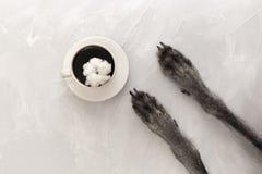Una taza de café sólo en un platillo en el centro y las patas del perro en un fondo gris Visión desde arriba Copie el espacio imagen de archivo libre de regalías