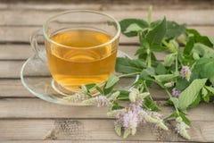 Una taza de cristal con té de oro con los soportes de las hojas y de flores de la menta en un platillo y en una tabla de madera e Fotos de archivo libres de regalías
