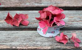 Una taza de hortensia Fotos de archivo