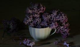 Una taza de lilas Fotografía de archivo