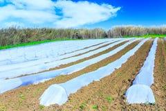 Una tecnologia tipica di agricoltura di lavori primaverili iniziali di Immagine Stock Libera da Diritti