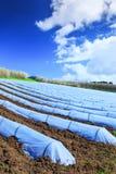 Una tecnologia tipica di agricoltura di lavori primaverili iniziali di Fotografia Stock