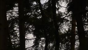 Una tempesta violenta nel legno video d archivio
