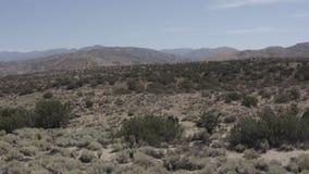 Una terra sterile del deserto con alcuni piccoli arbusti stock footage