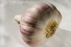 Una testa d'aglio su un fondo leggero Primo piano 2 Fotografia Stock Libera da Diritti