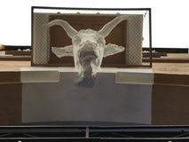 Una testa del ` s del toro sopra un mercato del centro di Kyiv, Ucraina Fotografie Stock
