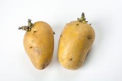 Una testa di due patate immagine stock libera da diritti