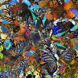 Una textura colorida exótica del fondo hecha de diverso butterfl Fotos de archivo