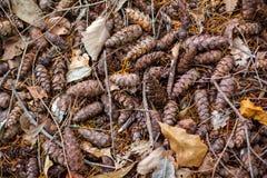 Una textura del fondo de los conos dispersados del pino en la tierra en el MES imágenes de archivo libres de regalías