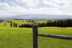 Una tierra extensa por completo de la hierba verde y fresca Imagen de archivo