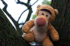 Una tigre nell'albero fotografia stock libera da diritti