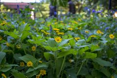 Una toppa gialla del fiore Immagine Stock