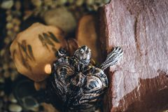 Una tortuga casera en el cierre del acuario para arriba foto de archivo libre de regalías