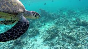 Una tortuga nada a través de un arrecife de coral almacen de metraje de vídeo