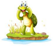 Una tortuga sonriente en una isla Fotografía de archivo libre de regalías