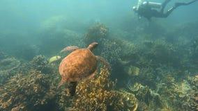 Una tortuga subacuática metrajes
