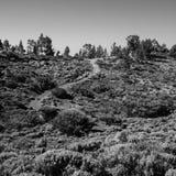 Una traccia arricciata attraverso la regione selvaggia di Teide del supporto immagine stock