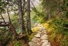Una traccia di escursione fra i pini vicino al lago dell'alta montagna Fotografia Stock