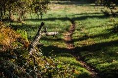 Una trayectoria bien sin embargo caminada un parque Fotos de archivo