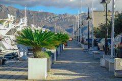 Una trayectoria con las palmeras a lo largo del puerto deportivo Imagen de archivo